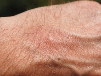 Close-up of hair on a mans hand