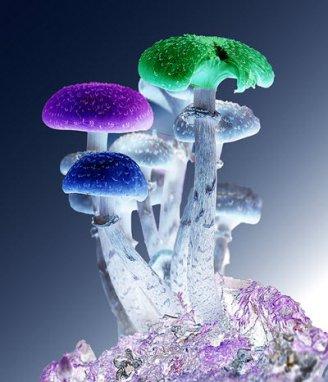 Multi-colored mushrooms